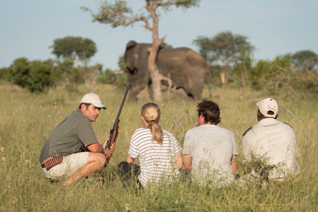 Kambaku Safari 11